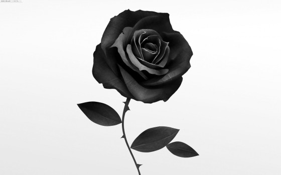 cropped-flowers-grayscale-graphic-art-roses-white-background.jpg